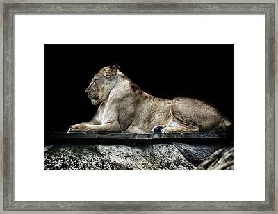 Proud Framed Print by Martin Newman