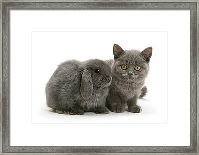 Proud Of My Grey Hare Framed Print