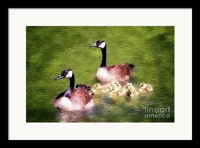 Geese Digital Art Framed Prints