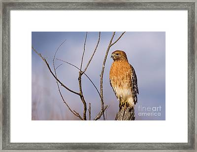Proud Profile Framed Print by Charles Hite