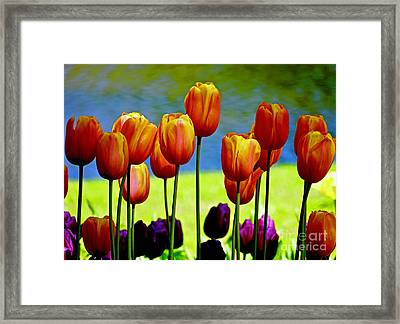 Proud Tulips Framed Print