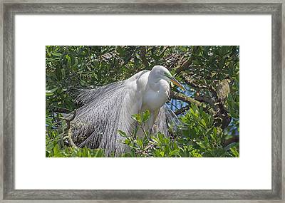 Proudly Posing Framed Print by Kenneth Albin