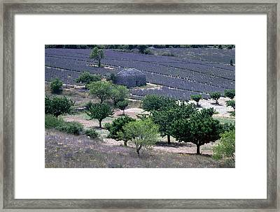 Provence Framed Print by Flavia Westerwelle