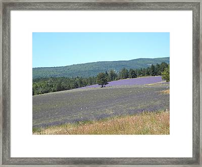 Framed Print featuring the photograph Provence Landscape by Manuela Constantin