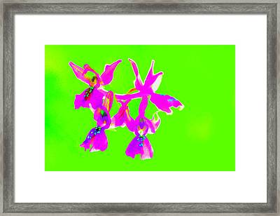 Green Provence Orchid  Framed Print