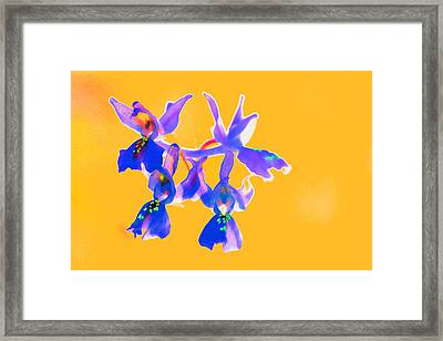 Orange Provence Orchid  Framed Print