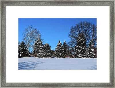 Provincial Pines Framed Print