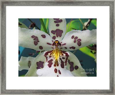Provoking Framed Print by Tina Marie