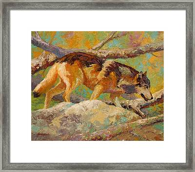 Prowler - Grey Wolf Framed Print by Marion Rose