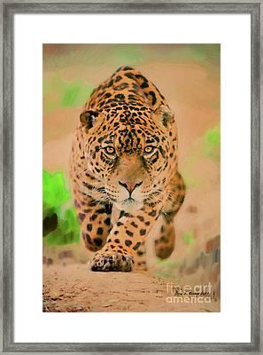 Prowling Leopard Framed Print