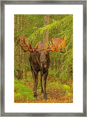 Prowling Through The Forest Abstract Framed Print