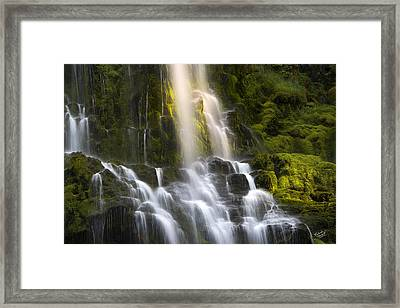 Proxy Falls In Forest Light Framed Print