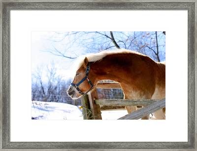 Pssssssh.....it's Not Cold Framed Print by Angela Rath