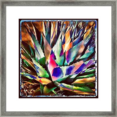 Psychedelic Agave Framed Print by Paul Cutright