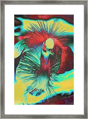 Psychedelic Crested Egret Framed Print by Richard Henne