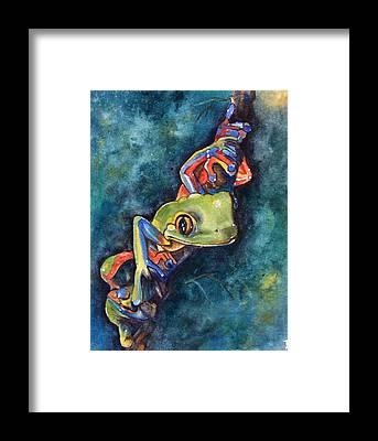Dart Frogs Framed Prints