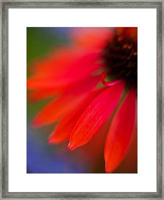 Psychedlia Framed Print by Mike Reid