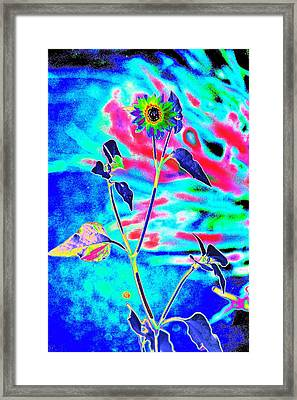 Psycho Daisy Framed Print by Richard Henne