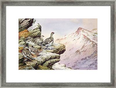 Ptarmigan On The High Tops Framed Print by Carl Donner