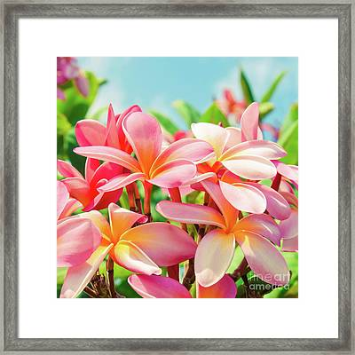 Framed Print featuring the photograph Pua Melia Ke Aloha Maui by Sharon Mau