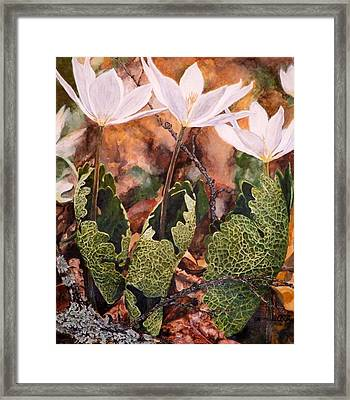 Puccoon Framed Print by Thomas Akers