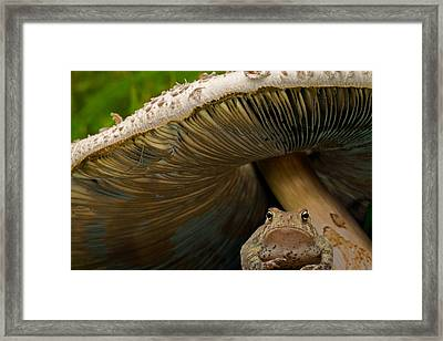 Pucker Up Princess Framed Print