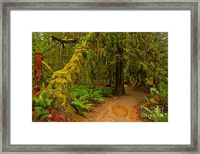 Puddle In The Path Framed Print by Adam Jewell