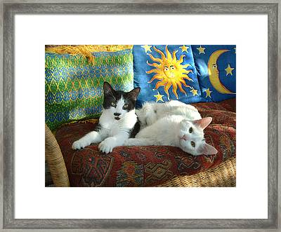 Puddy Tats Relax Framed Print by Gerard Fritz