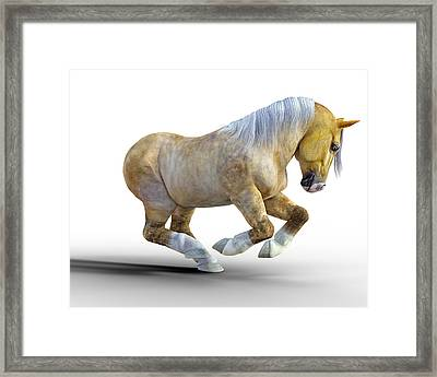 Pudge Framed Print by Betsy Knapp