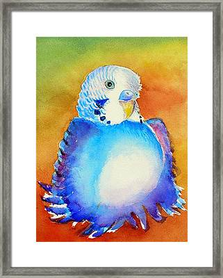 Pudgy Budgie Framed Print by Patricia Piffath