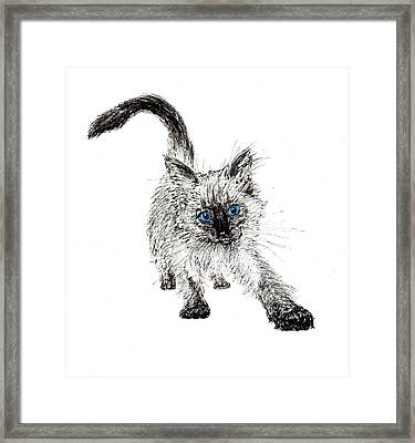 Pudsquiz Belina On The Prowl  Framed Print by Vincent Alexander Booth
