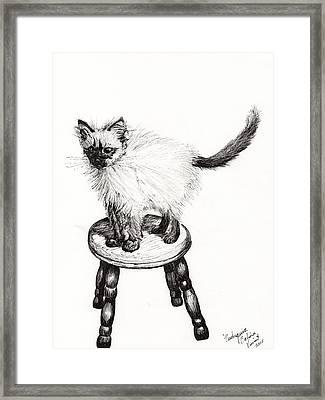 Pudsquiz Belina Framed Print by Vincent Alexander Booth