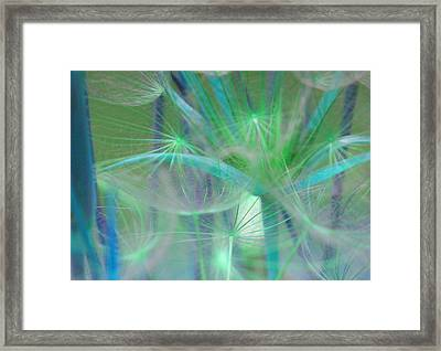 Puff Framed Print by Julie Lueders