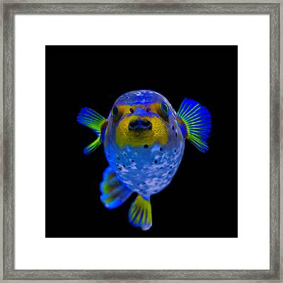 Puff Of Blue Framed Print
