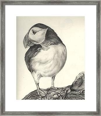 Puffin Framed Print by Aurora Jenson