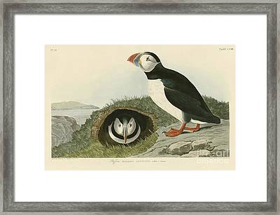 Puffin Framed Print by MotionAge Designs