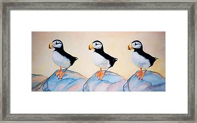 Puffin Rock Framed Print by Dee Van Houten