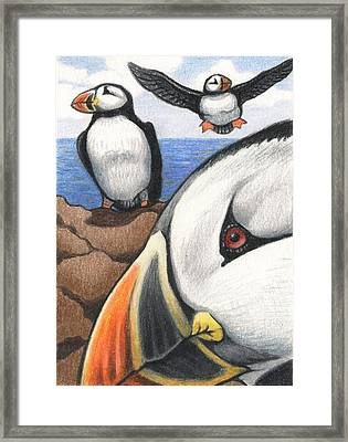 Puffins Framed Print by Amy S Turner