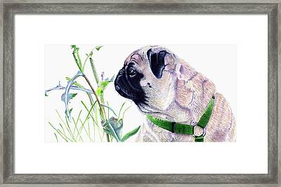 Pug And Nature Framed Print