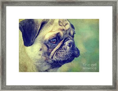 Pug Framed Print by Angela Doelling AD DESIGN Photo and PhotoArt