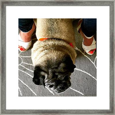 Pug Between Woman's Leg Framed Print