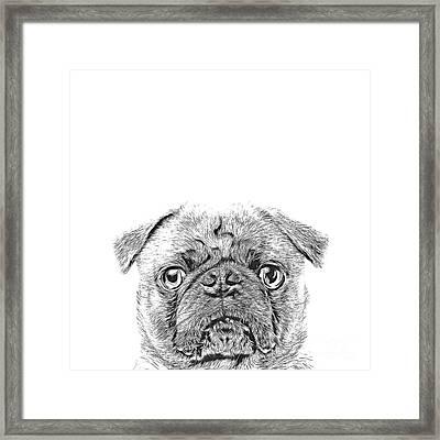 Pug Dog Sketch Framed Print