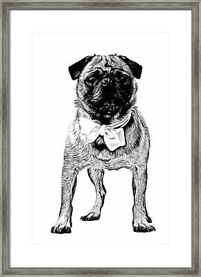 Pug Framed Print by Edward Fielding