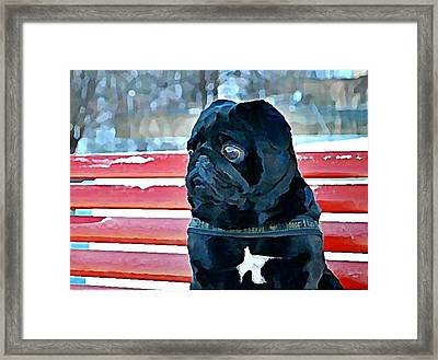 Pug In Deutschland Framed Print