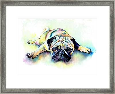 Pug Laying Flat Framed Print