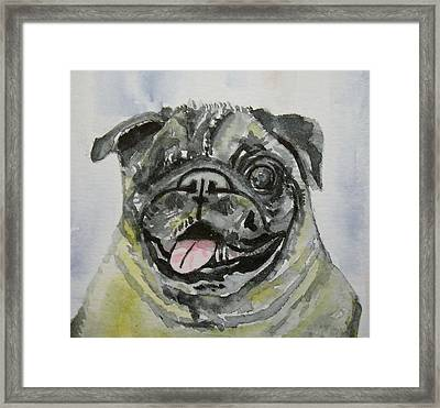 One Eyed Pug Portrait Framed Print