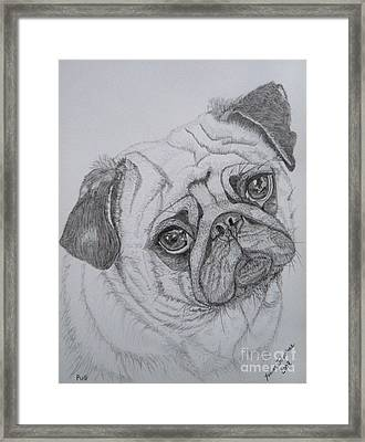 Pug Framed Print by Yvonne Johnstone