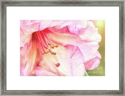 Puget Sound Rhododendron Framed Print by Jean OKeeffe Macro Abundance Art