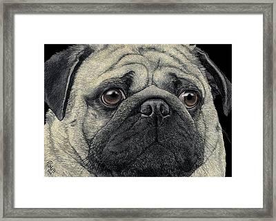 Pugshot Framed Print