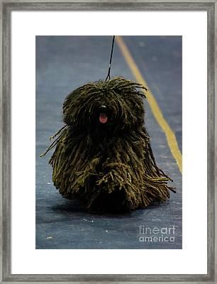 Puli An Hungarian Herding Dog Framed Print by Amir Paz